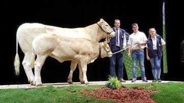 Jouvence et Luisant triomphent au concours Blonde d'Aquitaine