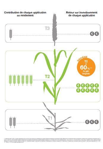 Répartition du programme fongicides selon BASF