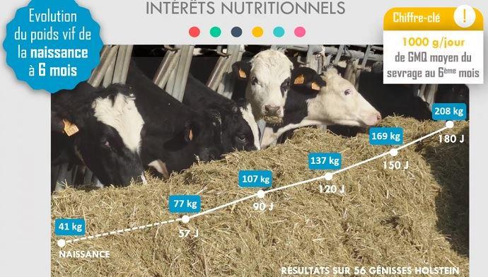 Distribution d'un mash fermier aux génisses laitières à la ferme expérimentale des Trinottières: impact sur l'évolution du poids vif