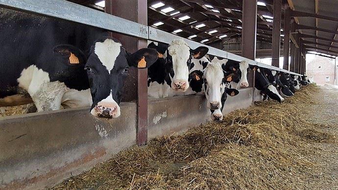 Quel complémentation? Pour qui? Quel concentré ? Comment alimenter au pâturage? Quel mode de distribution? Le guide de l'alimentation des vaches laitières répond à vos questions.