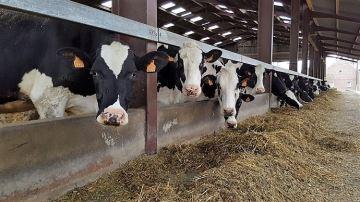 Démêlez le vrai du faux en matière d'alimentation des vaches laitières