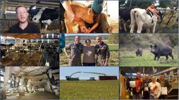 En 20 articles, ce qu'il fallait retenir de l'actualité de l'élevage bovin