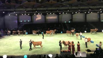 Rendez-vous du 9 au 12 janvier pour assister au concours bovin international