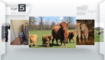 L'avenir de la filière viande bovine, remporte la 1ère marche du 1er podium 2019