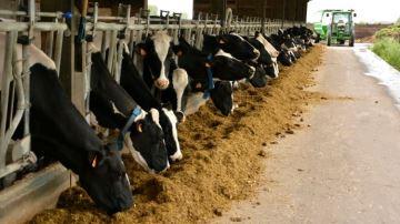 Des signaux positifs pour le prix du lait, en attendant le Brexit