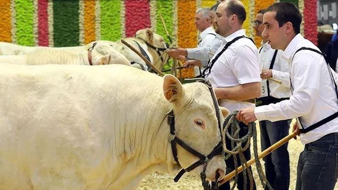 Le Simagena 2019 c'est 250 bovins rassemblés dans le hall 2 du Sima à Paris Villepinte