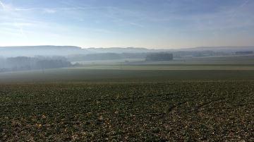 Progression des surfaces de céréales d'hiver, mais nette baisse pour le colza