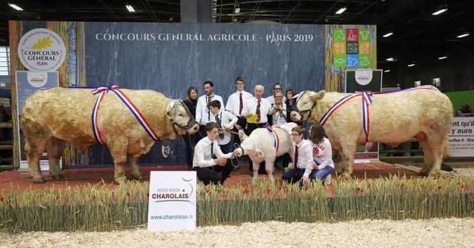champions concours charolais salon del agriculture 2019