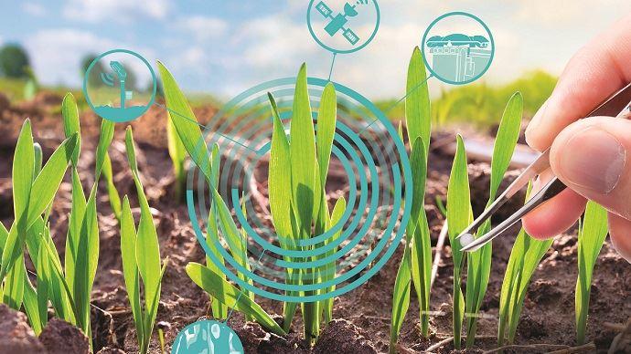 Pilotage de la fertilisation azotée en temps réel