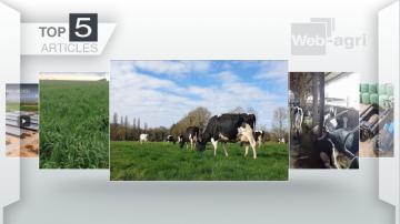 Une ferme de 4000 vaches laitières en Espagne fait le buzz