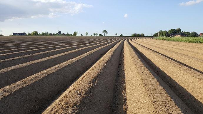 Le NEPG estime que les surfaces en pommes de terre pourraient atteindre 604000ha dans les 4 principaux pays producteurs européens.