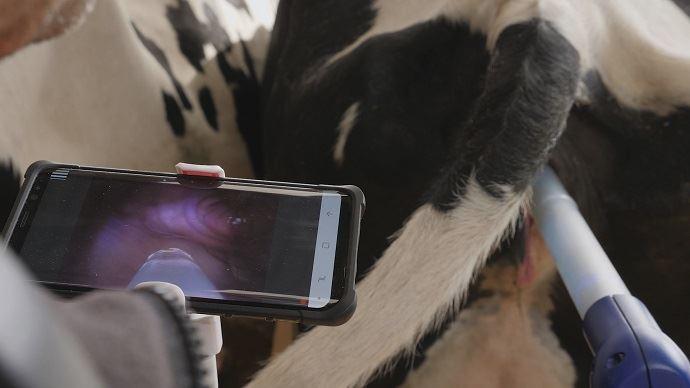 La caméra de l'Eye breed permet d'affiner le geste de l'inséminateur.
