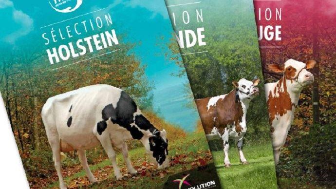 L'indexation d'avril pour les races Holstein, Pie Rouge et Normande révèlent les nouveautés génétiques de la coopérative.