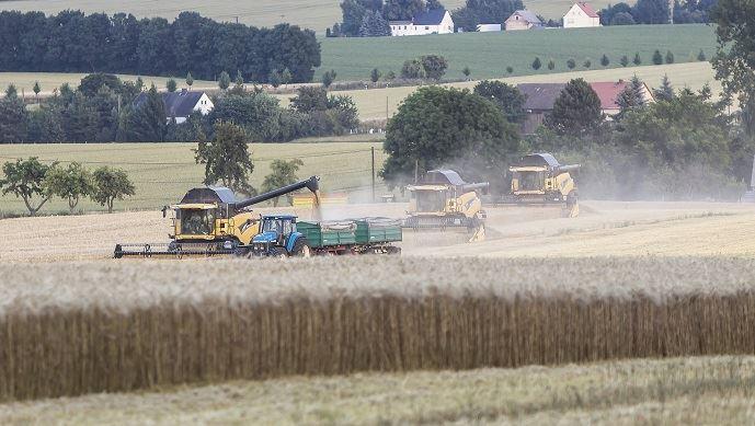 Les prévisions de récolte 2019 s'annoncent très bonnes chez les principaux producteurs mondiaux de blé tendre