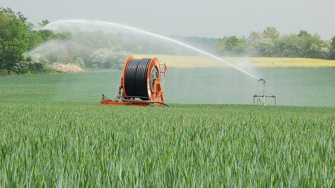 Irrigation blé