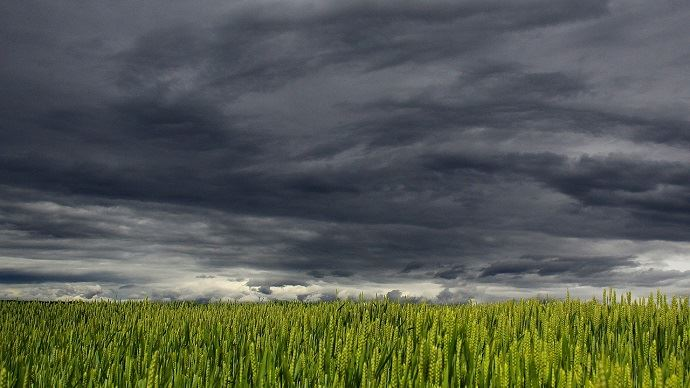 Tempête et champ de blé