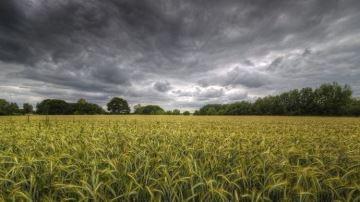 Des dizaines de millions d'euros de dégâts en agriculture
