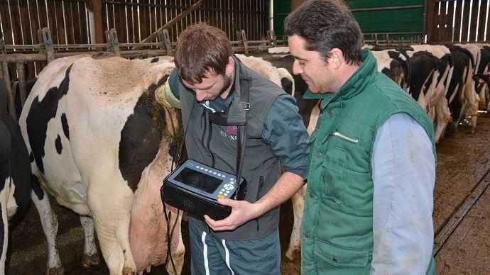 IVV, intervalle vêlage-IAfécondante, taux de gestation, taux de réussite à l'IA... : quels critères pour évaluer la fertilité et la fécondité des bovins?
