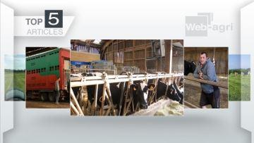 La canicule et ses effets sur les bovins au centre des attentions