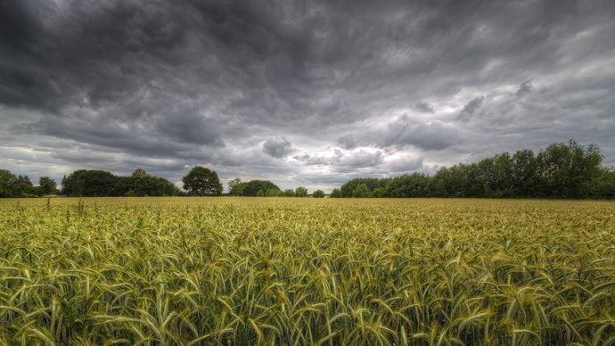 Champ de blé et orage