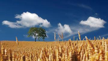Quel temps pour la fin des récoltes et le début des semis d'automne?