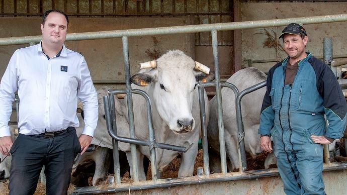 Filière Viande du Sud Toulousain: vente directe de viande de boeufs race Gasconne des Pyrénées label rouge