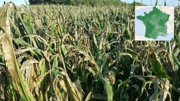 Les estimations de rendements en maïs fourrage, département par département