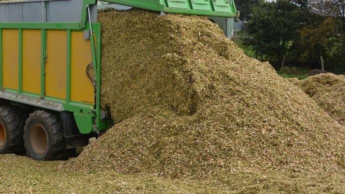 Les conservateurs pour l'ensilage de maïs permettent soit d'accélérer l'acidification ou de maintenir la stabilité.