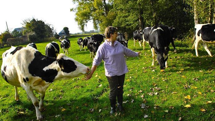 Eleveuse laitière