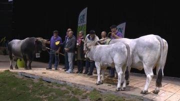 Linotte et Igor champions de la race Gasconne des Pyrénées