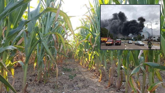 Depuis l'incendie, jeudi 26 septembre, de l'usine Seveso Lubrizol à Rouen, les ensilages de maïs sont interdits par arrêté préfectoral dans 204 communes de Seine-Maritime, l'Oise, la Somme et l'Aisne.