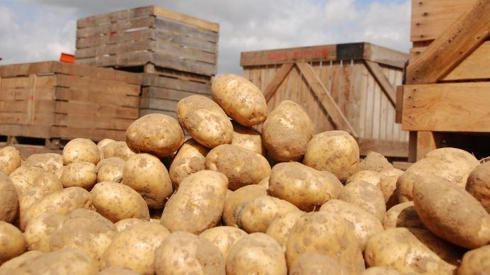 Stockage de pommes de terre