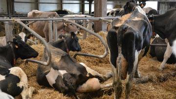 Organiser le travail et les bâtiments en faveur de la santé du troupeau