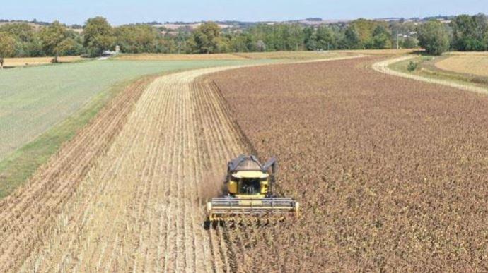 Récolte de tournesols