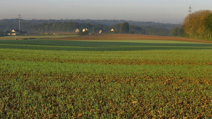 Parcelle de blé à l'automne