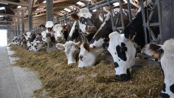La région Normandie va avancer 5 millions d'euros aux agriculteurs