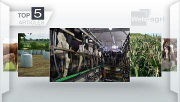 Monotraite, rendements des maïs et lait bio: les trois sujets de la semaine