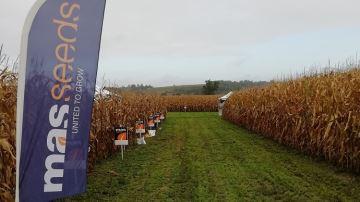 Mas Seeds réorganise sa gamme maïs avec plusieurs labels pour les semis 2020