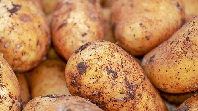 La récolte de pommes de terre française en hausse de 6% en 2019