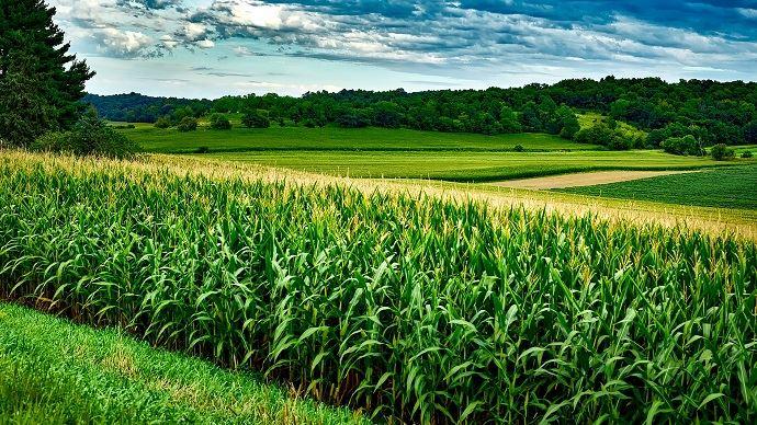 Les cours du maïs et du soja cotés à Chicago ont progressé vendredi après l'annonce d'un accord entre Pékin et Wshington