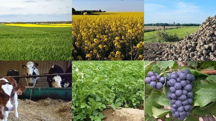 Différentes productions agricoles