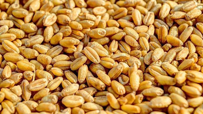 L'Algérie dynamise la demande internationale en blé