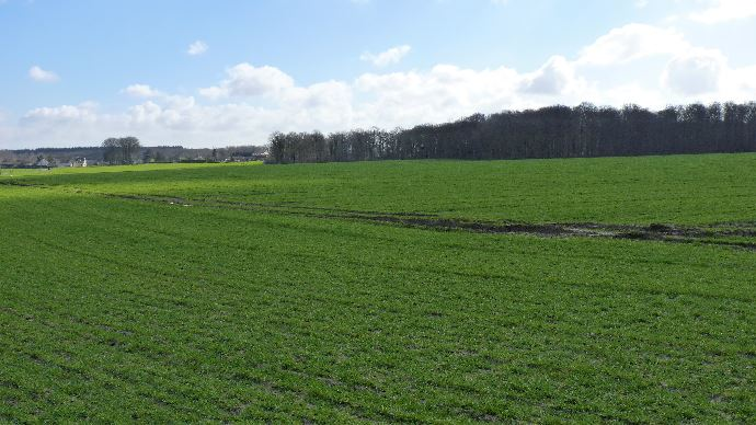 Aux États-Unis,même tendance qu'en Europe: des surfaces de blé en baisse