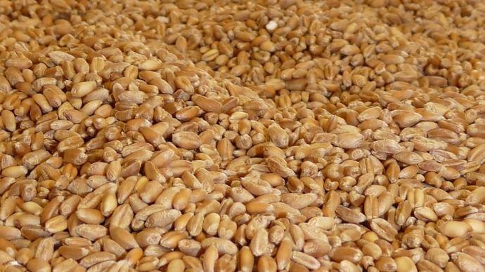 Une production mondiale de blé attendue à un niveau record en 2020