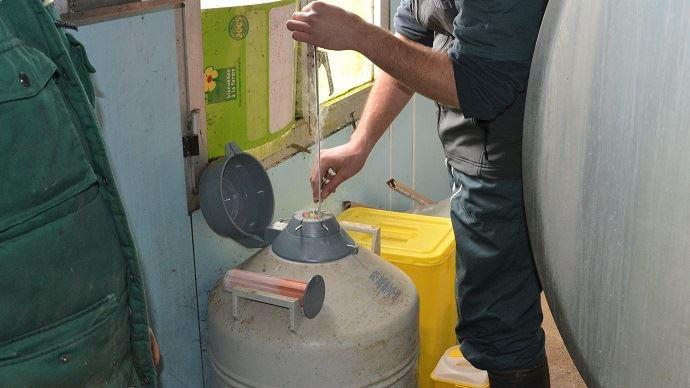Cuve d'azote remplie de doses d'insémination artificielle bovine