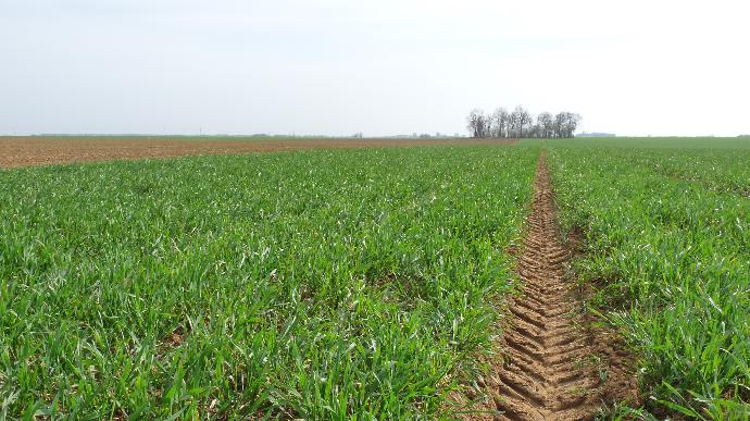 Les conditions de cultures restent préoccupantes pour le blé