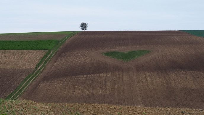 coeur dans un champ