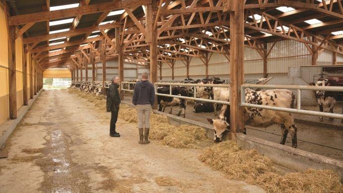 deux eleveurs dans une etable a vaches laitieres
