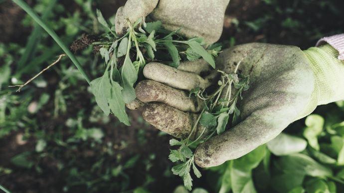 Le gouvernement a précisé le dispositif permettant à ceux qui le souhaitent de travailler en agriculture pendant le Covid-19