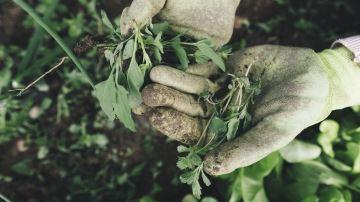 Le gouvernement précise les modalités pour ceux qui veulent aider l'agriculture